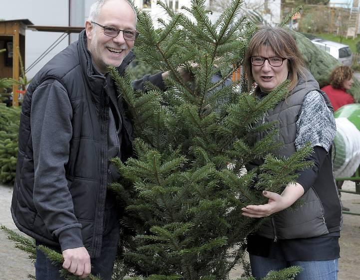 Weihnachtsbaum Brauchtum.Brauchtum Der Weihnachtsbaum Muss Pieksen