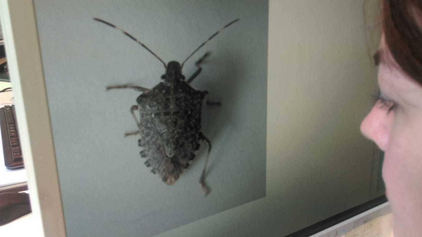 braune käfer in der wohnung