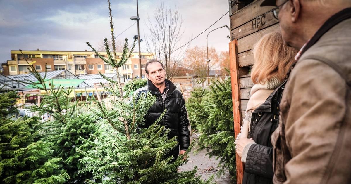 Tannenbaum Selber Schlagen Düsseldorf.Hier Gibt Es In Düsseldorf Weihnachtsbäume