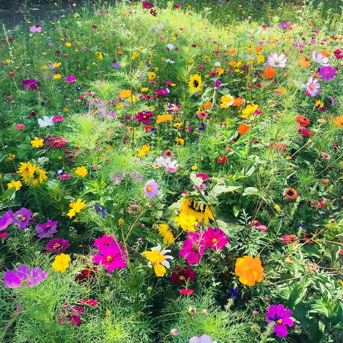 Mönchengladbach 160 Wildblumen Und Staudenoasen Für Die Stadt