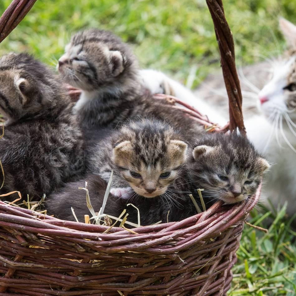 In Auto versteckt: Katzenbabys in Berlin vor Schrottpresse gerettet