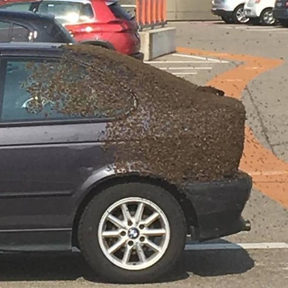 Tierischer Einsatz in Mönchengladbach: Bienenvolk nistet sich in Auto ein