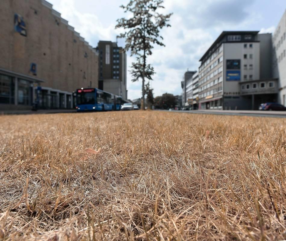 Klima: Hitze:Die ersten Wuppertaler Bäume sterben