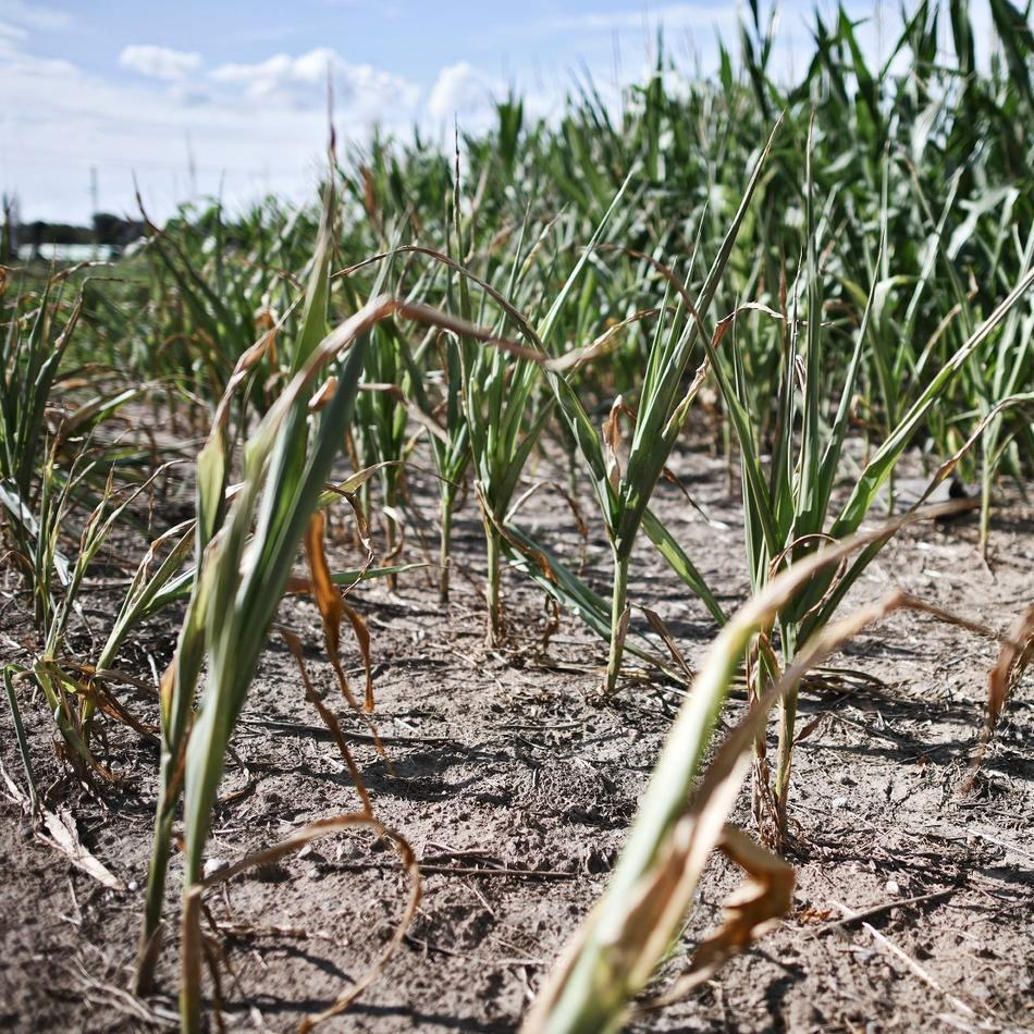 Landwirtschaft: Trockenheit: Das Thema Futter macht den Landwirten Sorgen