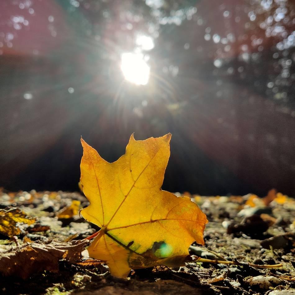 """Temperaturen über 20 Grad: """"Goldener Oktober"""" in NRW: So wird das Wetter in Düsseldorf, Krefeld und Wuppertal"""