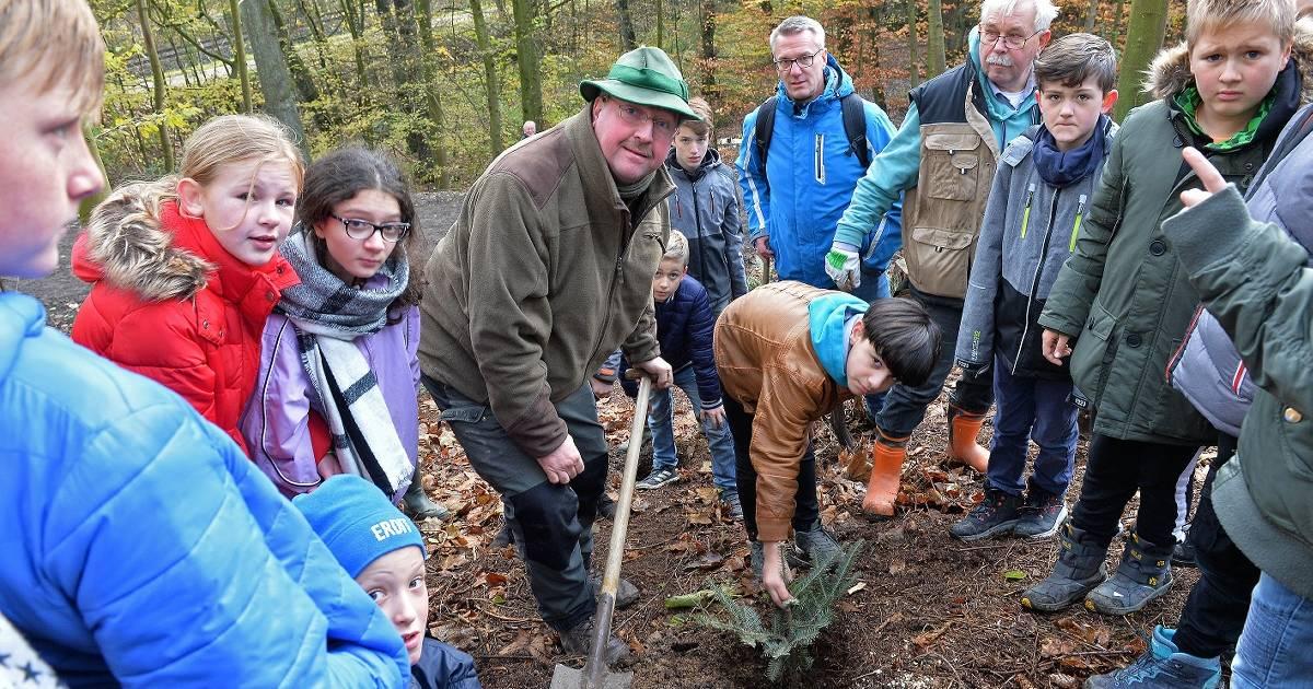 Schüler pflanzen Bäume in Velbert: Schüler verjüngen gebeutelten Wald - Westdeutsche Zeitung