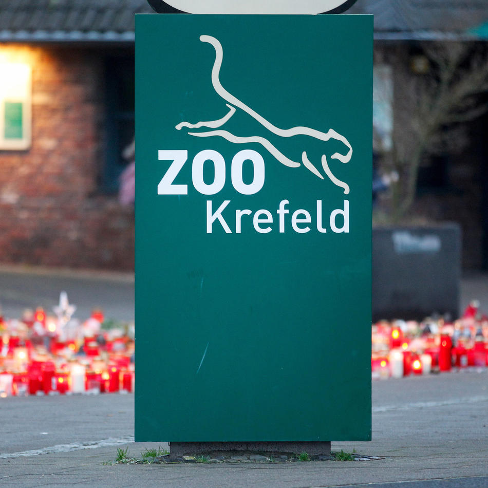 """Nach Brand in der Silvesternacht: Zoo Krefeld beschließt Bau eines neuen """"Affenparks"""""""